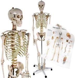 Organes et structures