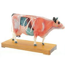 Modèle d'acupuncture vache ST-ATM127