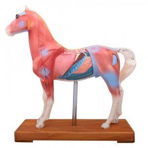 Modèle d'acupuncture: cheval ST-ATM128
