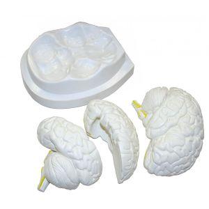 Cerveau modèle - modèle anatomique en 3 parties ST-ATM 56