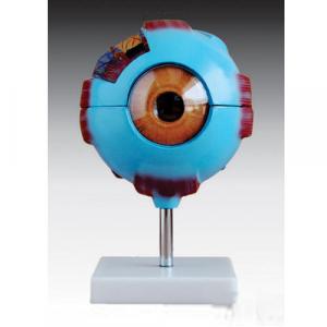 Globe oculaire modèle anatomique ST-ATM 64